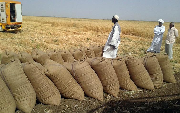 الأمم المتحدة تشتري ٨٠ الف طن من القمح للسودان