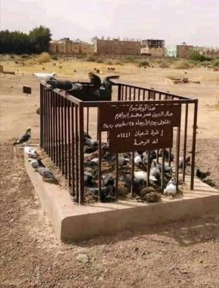 بالصور : طيور تُعيد ذكرى وفاة وزير الدفاع السوداني