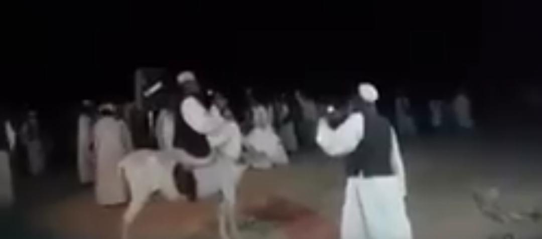بالفيديو| عجائب الفن السوداني..فنان يغني ممتطياً حماره!