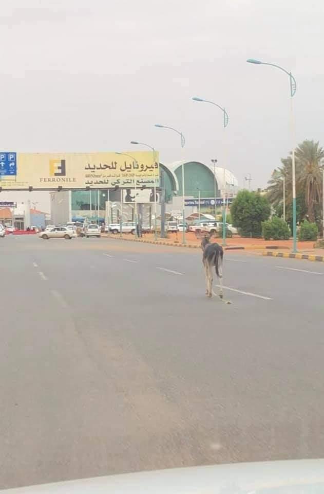 """بالصور..رواد مواقع التواصل الإجتماعي يتداولون صورل """"حمار""""يتجول وحيدا أمام مطار الخرطوم"""