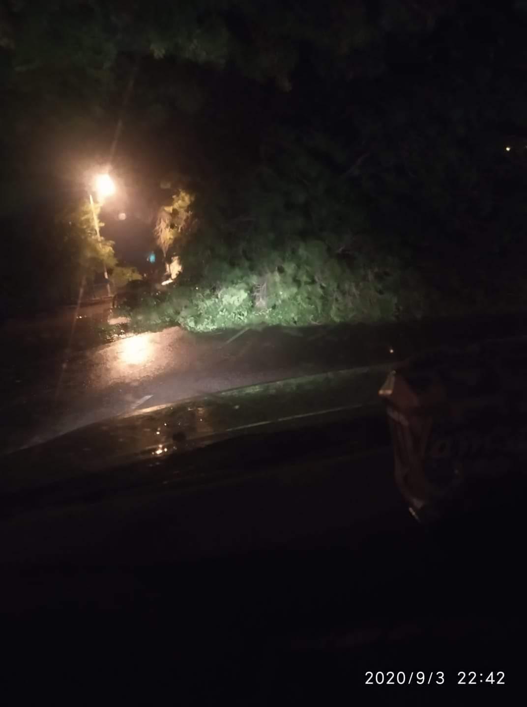سقوط شجرة عملاقة بشارع النيل أمدرمان وإغلاق الشارع بالكامل